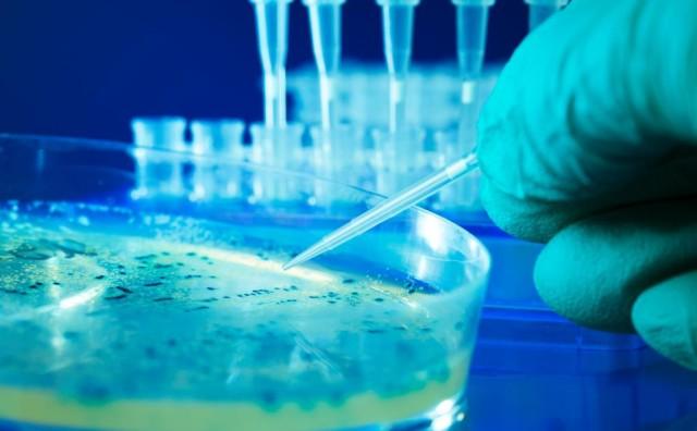 cellule staminali legge balduzzi